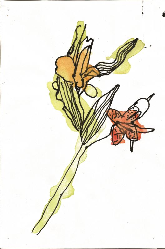 Student drawing of a flower